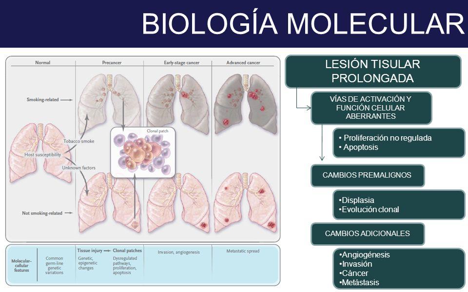 BIOLOGÍA MOLECULAR LESIÓN TISULAR PROLONGADA Proliferación no regulada
