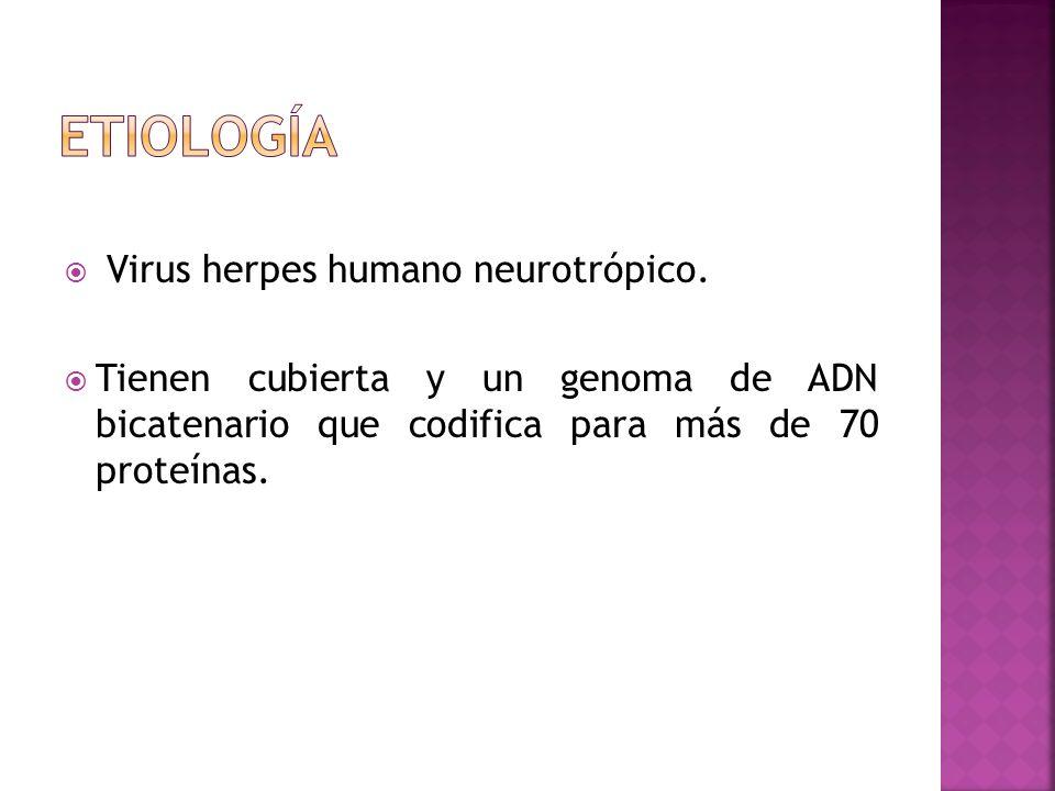 etiología Virus herpes humano neurotrópico.