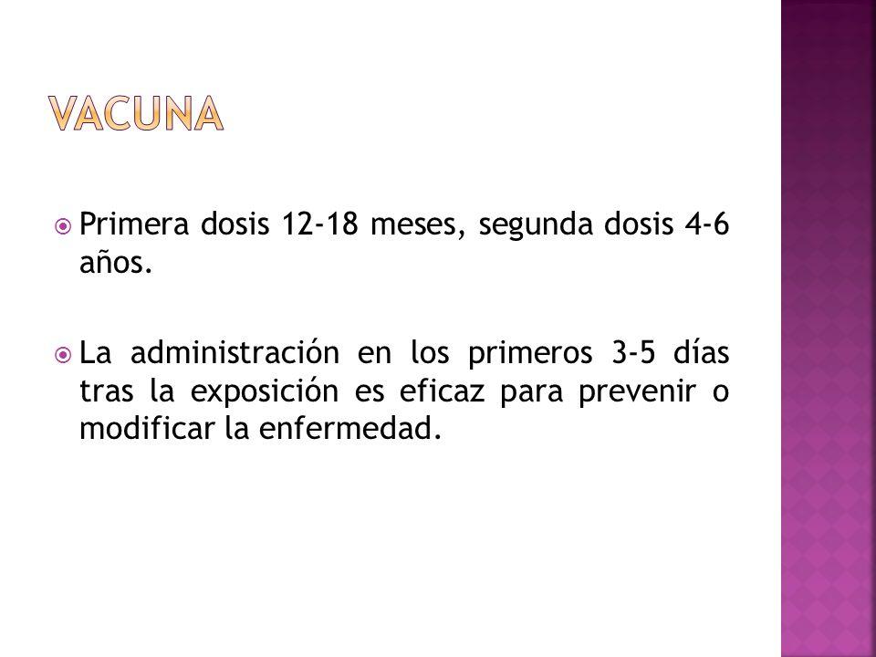 Vacuna Primera dosis 12-18 meses, segunda dosis 4-6 años.