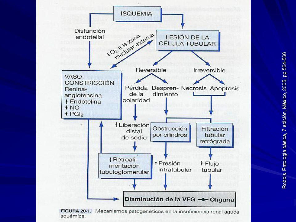 Robbis. Patología básica, 7 edición, México, 2005, pp 564-566