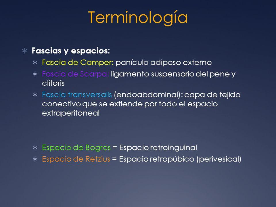 Terminología Fascias y espacios: