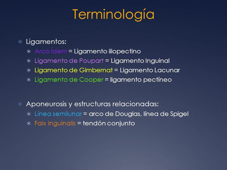 Terminología Ligamentos: Aponeurosis y estructuras relacionadas: