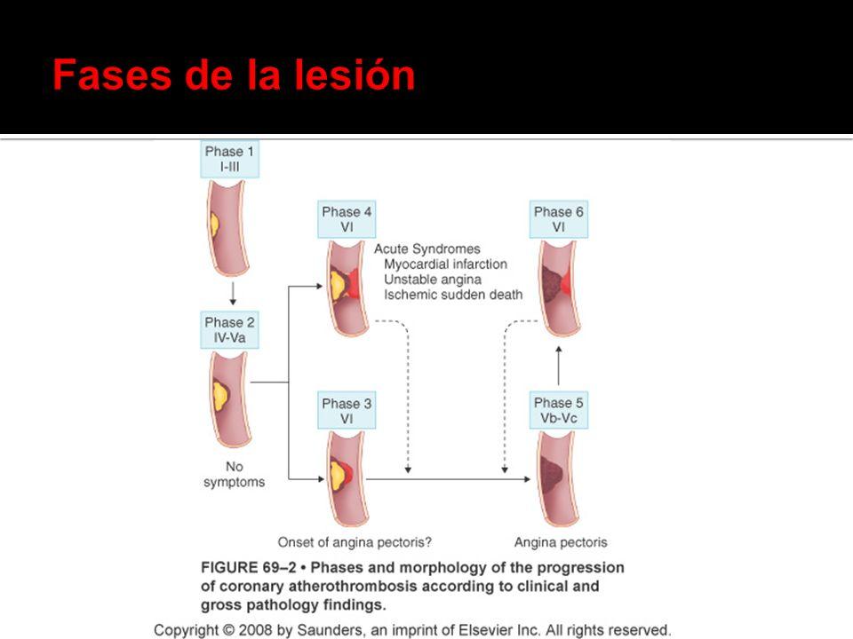Fases de la lesión