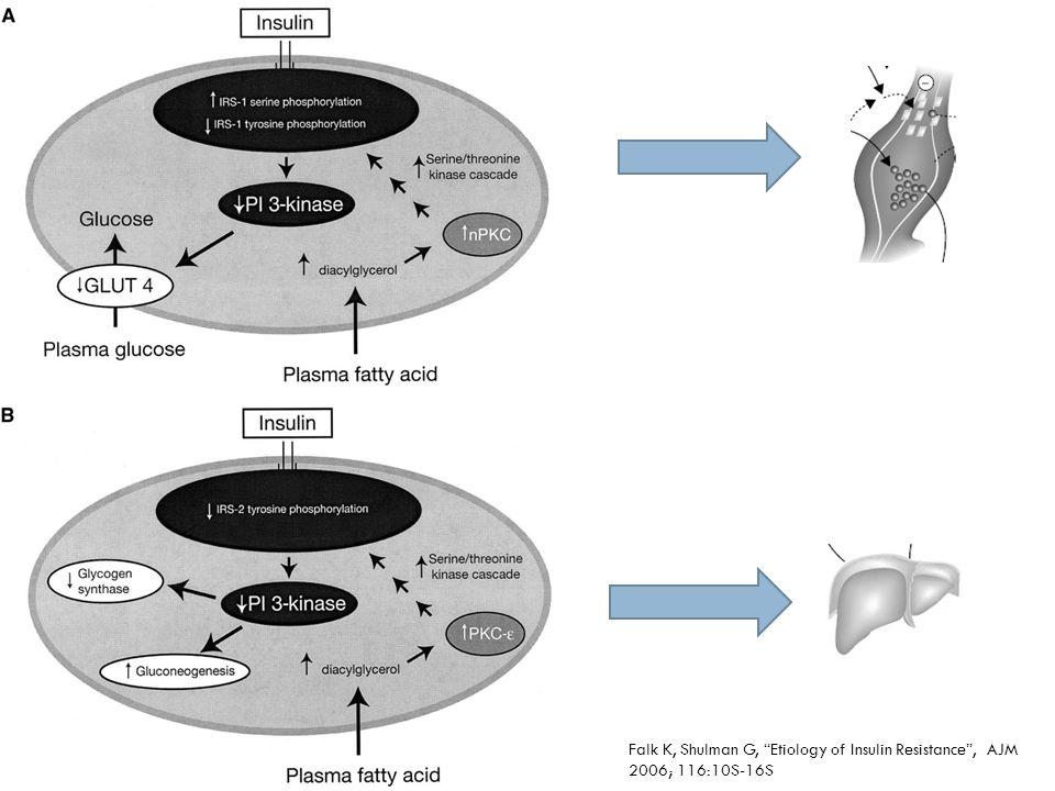 PKC: protein cinasa C IRS: Insuline receptor substrate. PI KINASA: fosfatidil inocitol cinasa.