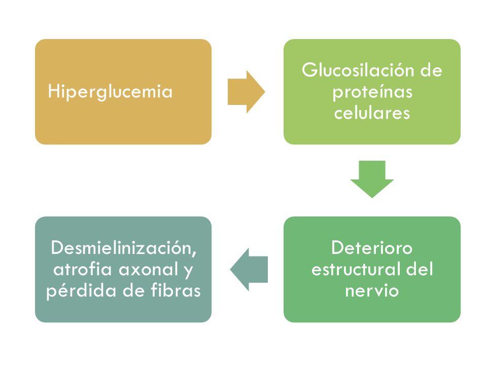 Glucosilación de proteínas celulares Deterioro estructural del nervio
