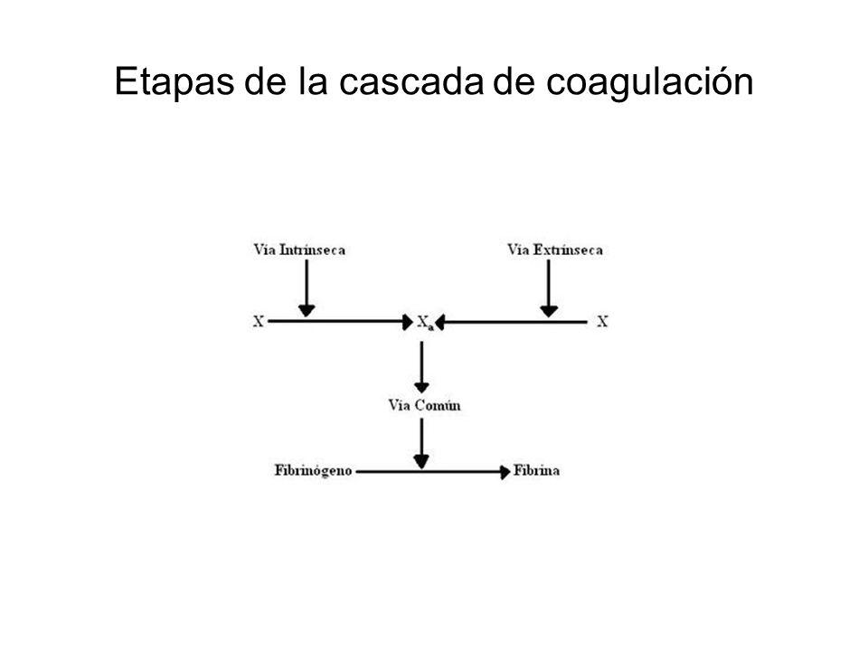 Etapas de la cascada de coagulación