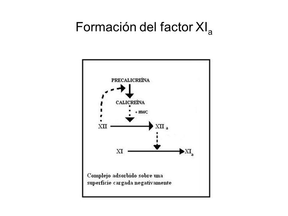Formación del factor XIa