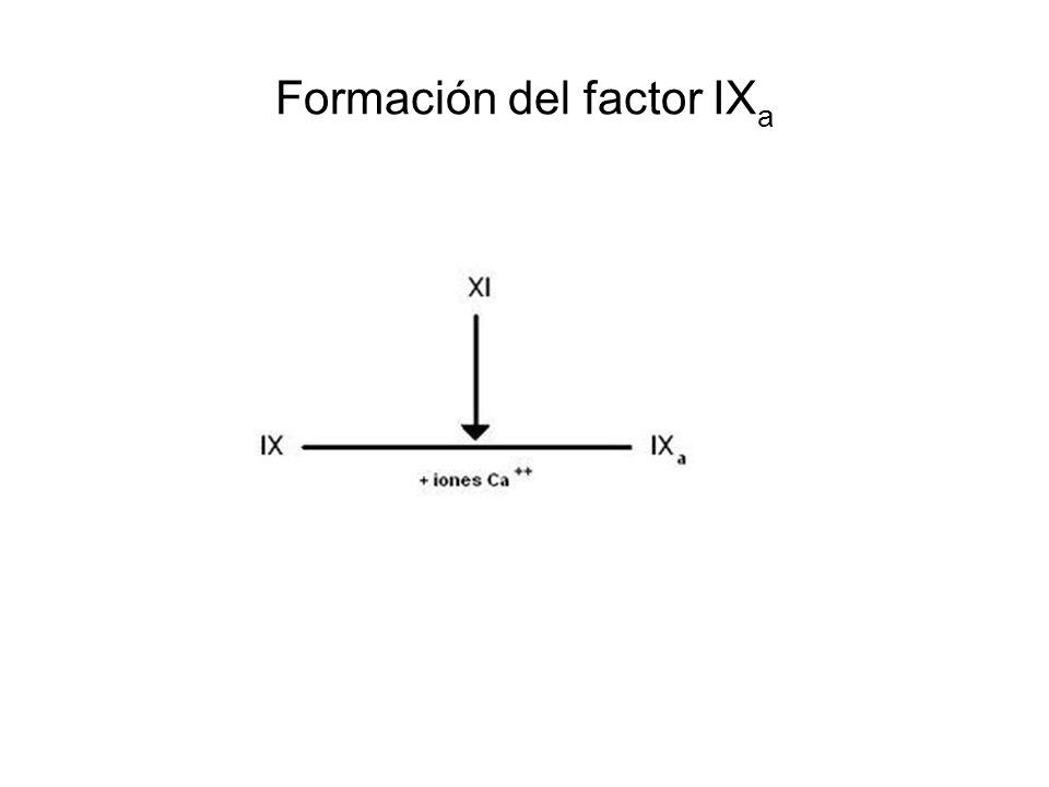 Formación del factor IXa