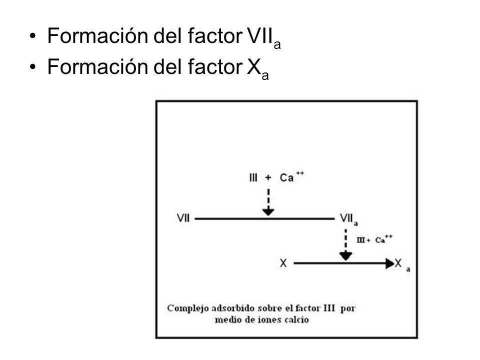 Formación del factor VIIa
