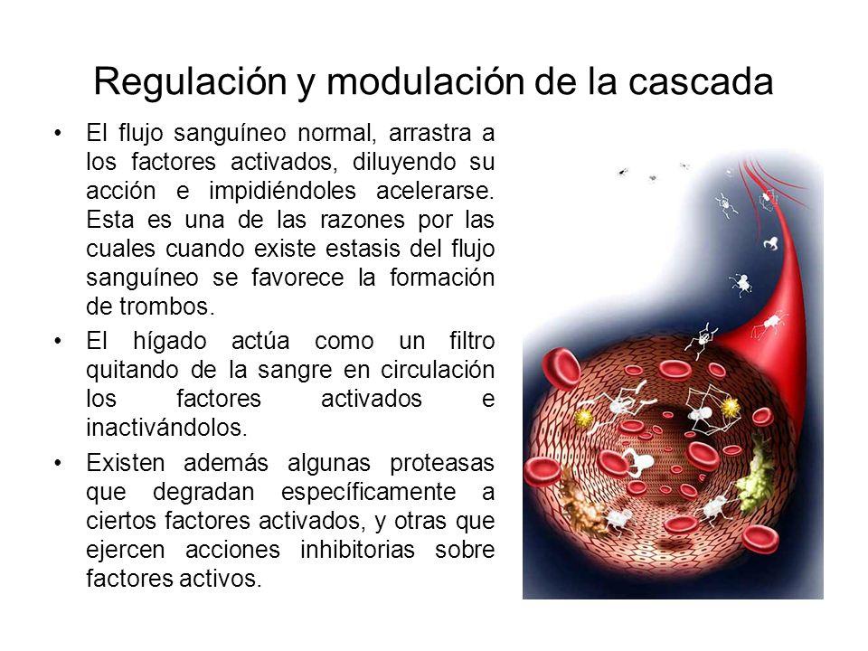 Regulación y modulación de la cascada
