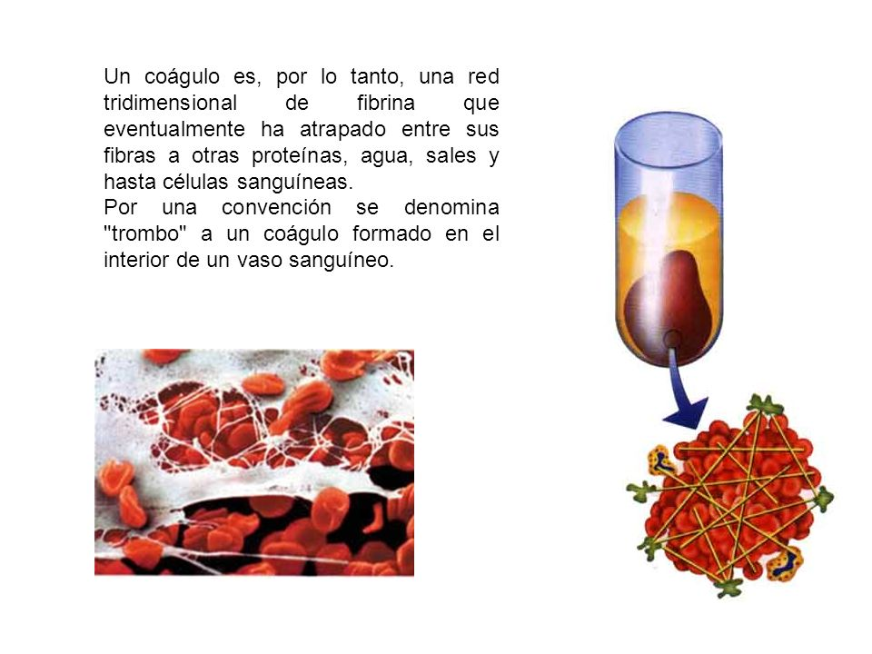 Un coágulo es, por lo tanto, una red tridimensional de fibrina que eventualmente ha atrapado entre sus fibras a otras proteínas, agua, sales y hasta células sanguíneas.