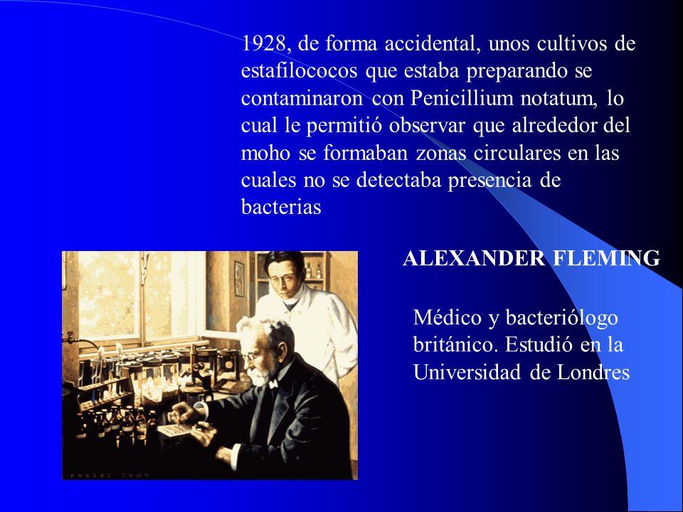 1928, de forma accidental, unos cultivos de estafilococos que estaba preparando se contaminaron con Penicillium notatum, lo cual le permitió observar que alrededor del moho se formaban zonas circulares en las cuales no se detectaba presencia de bacterias