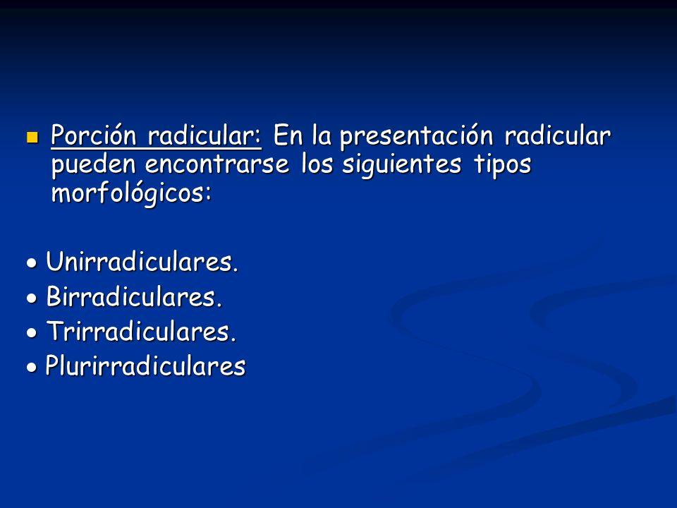 Porción radicular: En la presentación radicular pueden encontrarse los siguientes tipos morfológicos:
