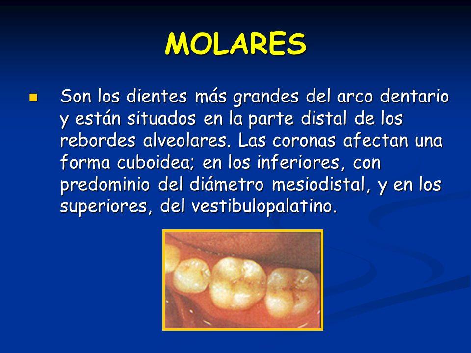 MOLARES