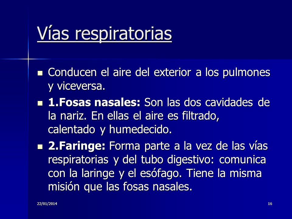Vías respiratorias Conducen el aire del exterior a los pulmones y viceversa.
