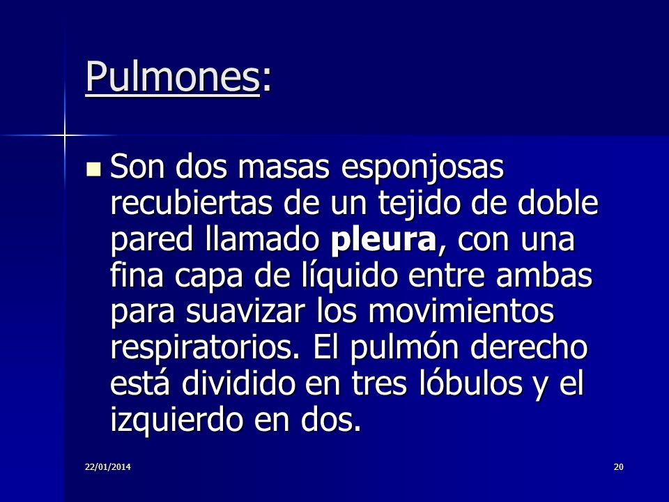 Pulmones: