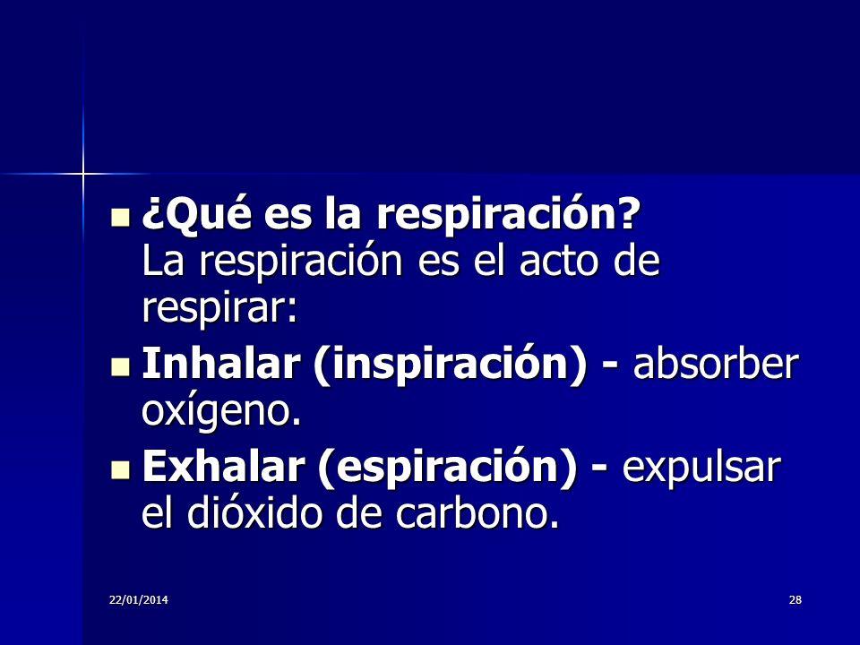 ¿Qué es la respiración La respiración es el acto de respirar: