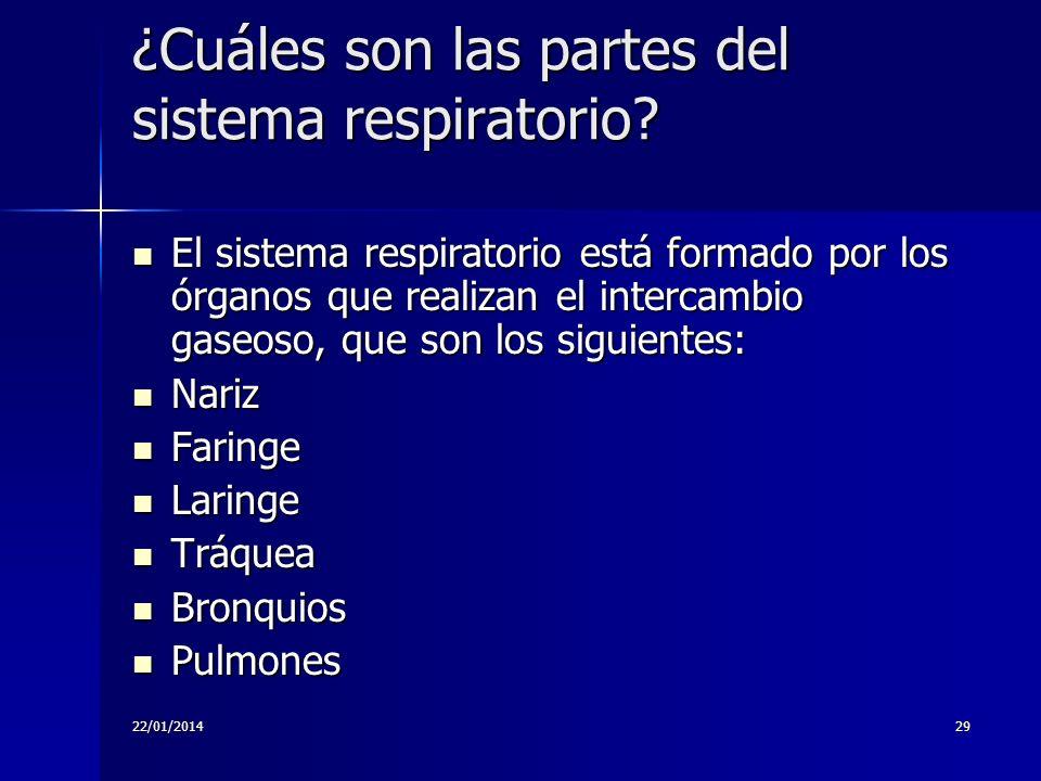 ¿Cuáles son las partes del sistema respiratorio