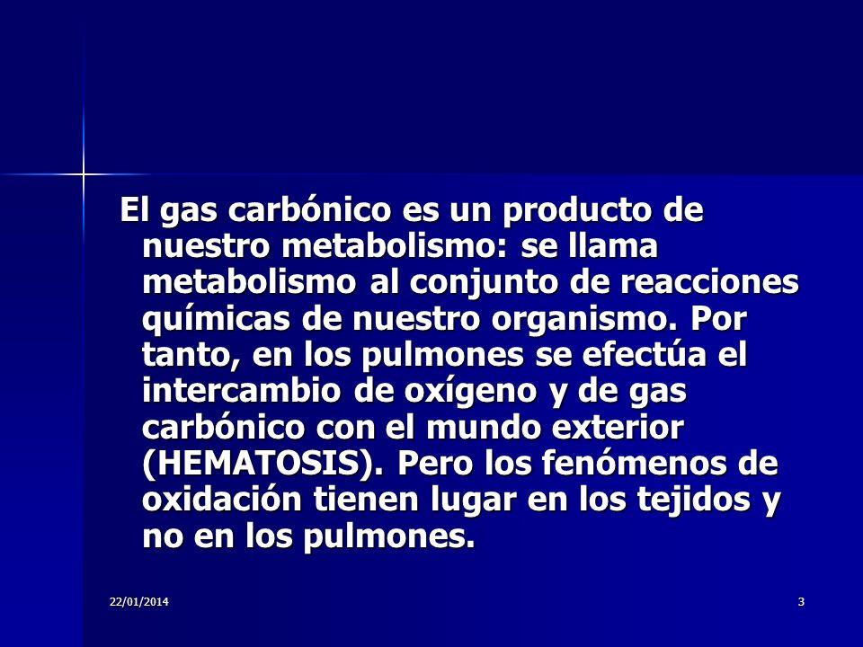 El gas carbónico es un producto de nuestro metabolismo: se llama metabolismo al conjunto de reacciones químicas de nuestro organismo. Por tanto, en los pulmones se efectúa el intercambio de oxígeno y de gas carbónico con el mundo exterior (HEMATOSIS). Pero los fenómenos de oxidación tienen lugar en los tejidos y no en los pulmones.