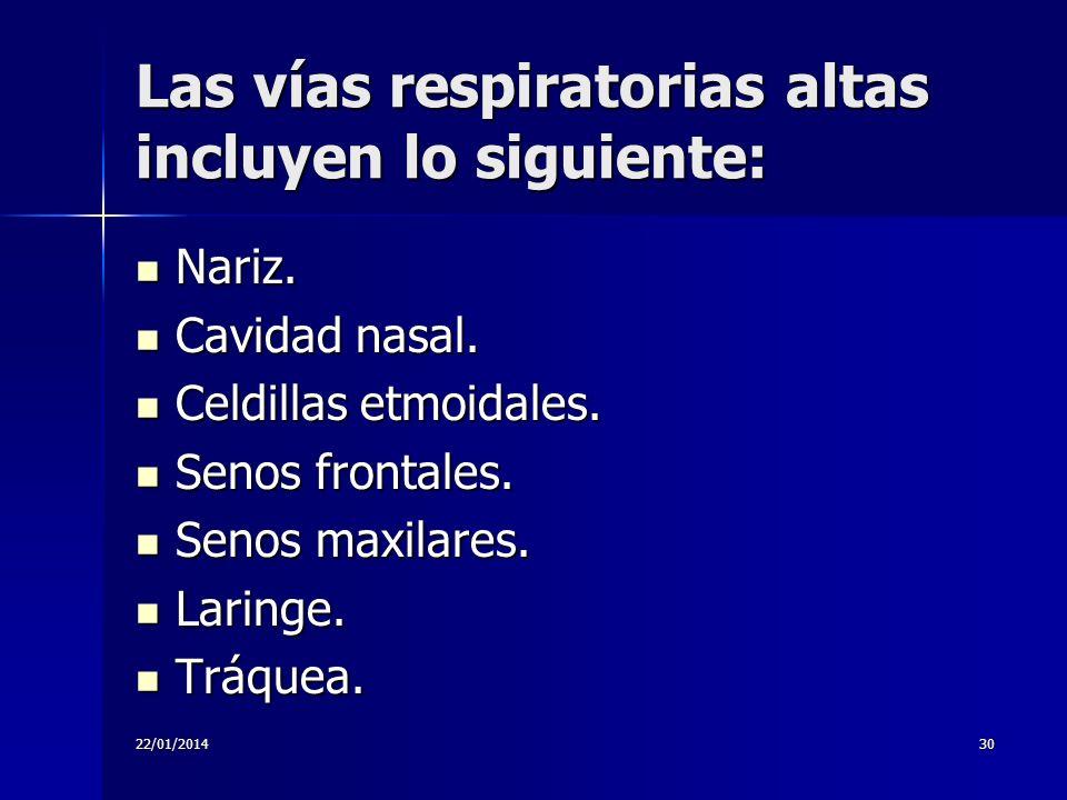 Las vías respiratorias altas incluyen lo siguiente: