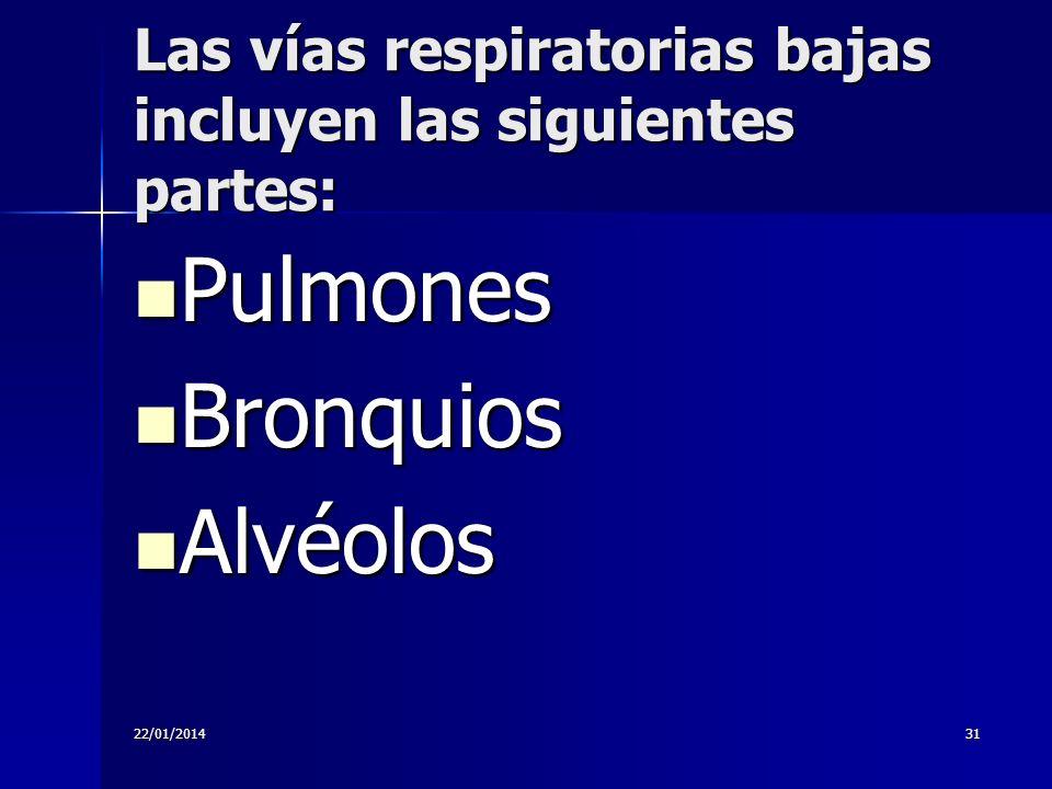 Las vías respiratorias bajas incluyen las siguientes partes: