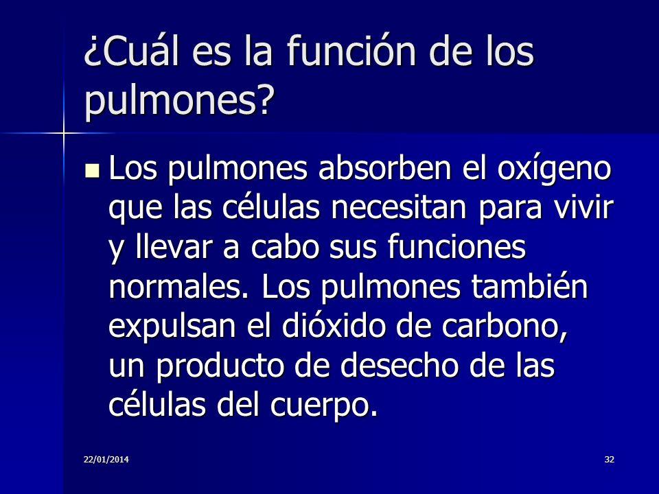 ¿Cuál es la función de los pulmones