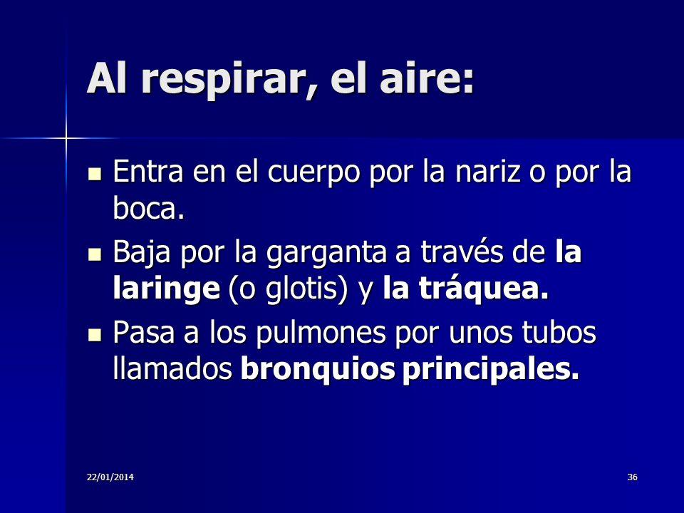 Al respirar, el aire: Entra en el cuerpo por la nariz o por la boca.