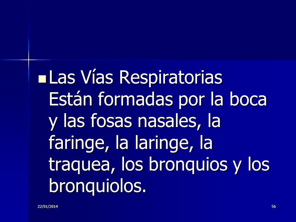 Las Vías Respiratorias Están formadas por la boca y las fosas nasales, la faringe, la laringe, la traquea, los bronquios y los bronquiolos.