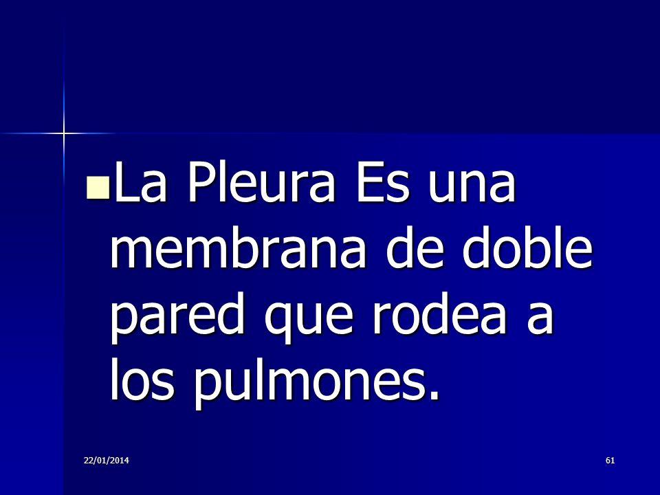 La Pleura Es una membrana de doble pared que rodea a los pulmones.