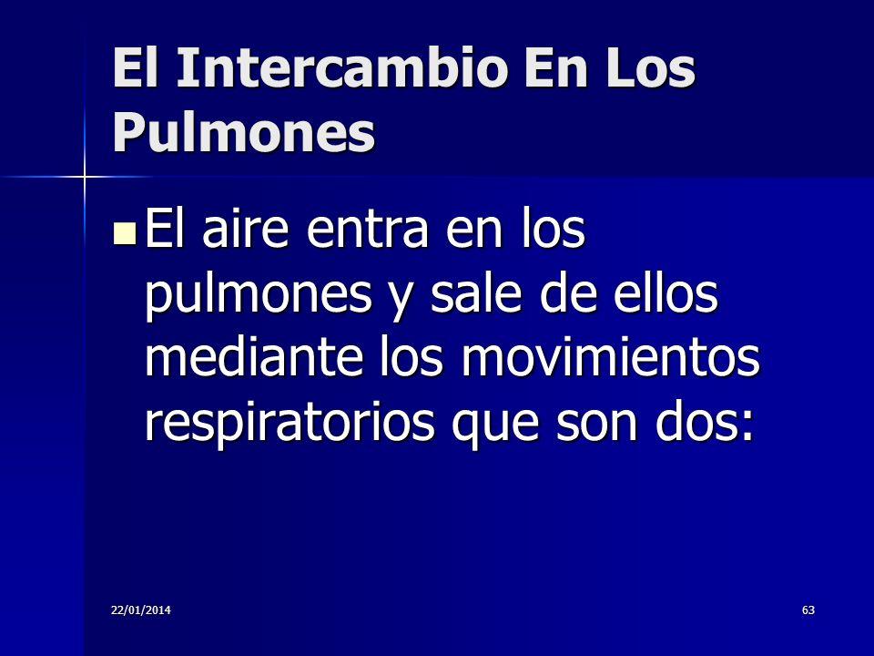 El Intercambio En Los Pulmones