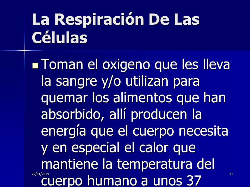 La Respiración De Las Células