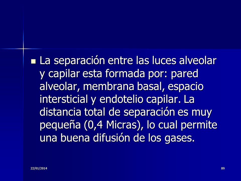 La separación entre las luces alveolar y capilar esta formada por: pared alveolar, membrana basal, espacio intersticial y endotelio capilar. La distancia total de separación es muy pequeña (0,4 Micras), lo cual permite una buena difusión de los gases.