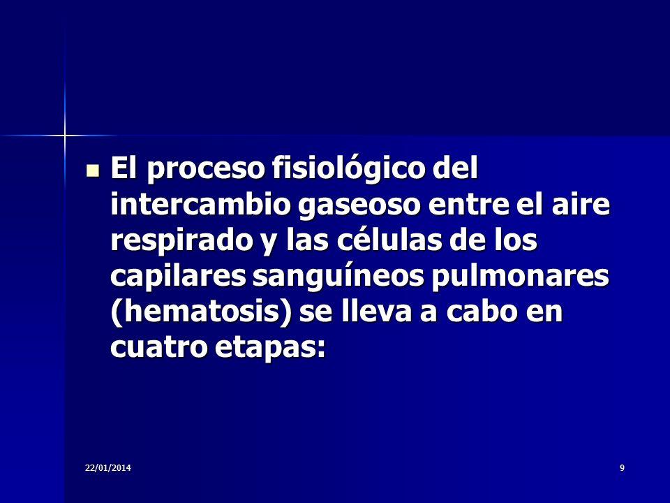 El proceso fisiológico del intercambio gaseoso entre el aire respirado y las células de los capilares sanguíneos pulmonares (hematosis) se lleva a cabo en cuatro etapas: