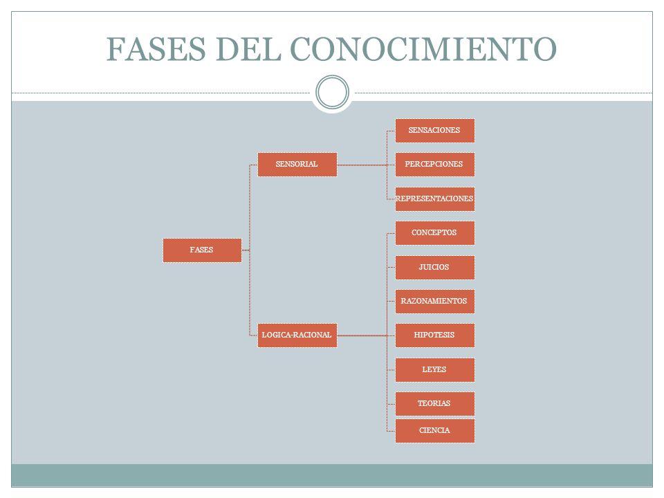 FASES DEL CONOCIMIENTO