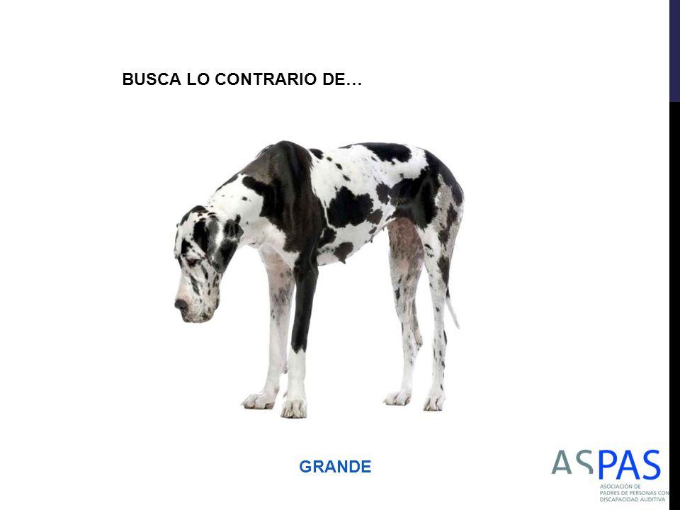 BUSCA LO CONTRARIO DE… GRANDE