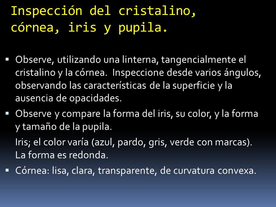 Inspección del cristalino, córnea, iris y pupila.