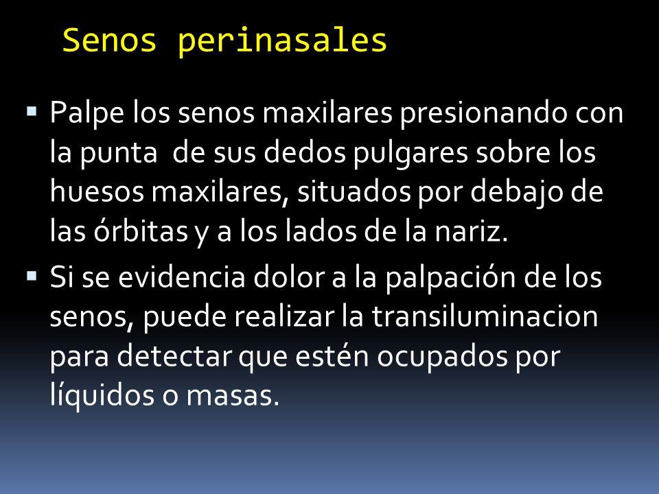 Senos perinasales
