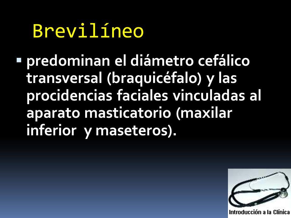Brevilíneo