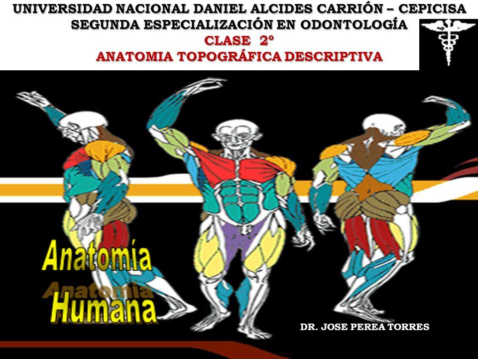 UNIVERSIDAD NACIONAL DANIEL ALCIDES CARRIÓN – CEPICISA SEGUNDA ESPECIALIZACIÓN EN ODONTOLOGÍA CLASE 2º ANATOMIA TOPOGRÁFICA DESCRIPTIVA