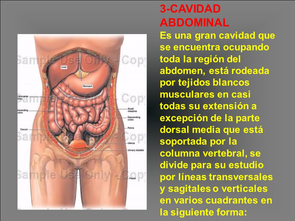 3-CAVIDAD ABDOMINAL