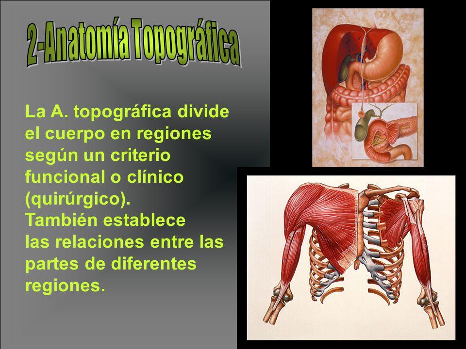 2-Anatomía Topográfica