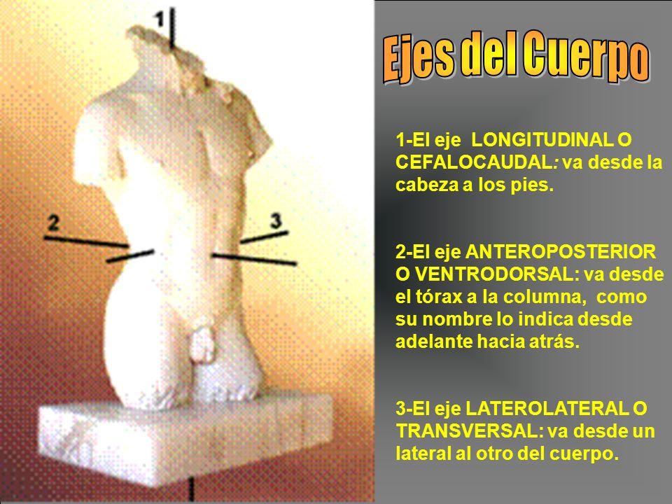 Ejes del Cuerpo 1-El eje LONGITUDINAL O CEFALOCAUDAL: va desde la cabeza a los pies.