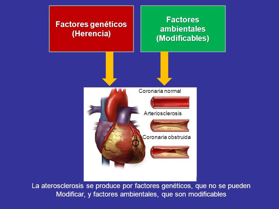 Factores genéticos (Herencia) Factores ambientales (Modificables)