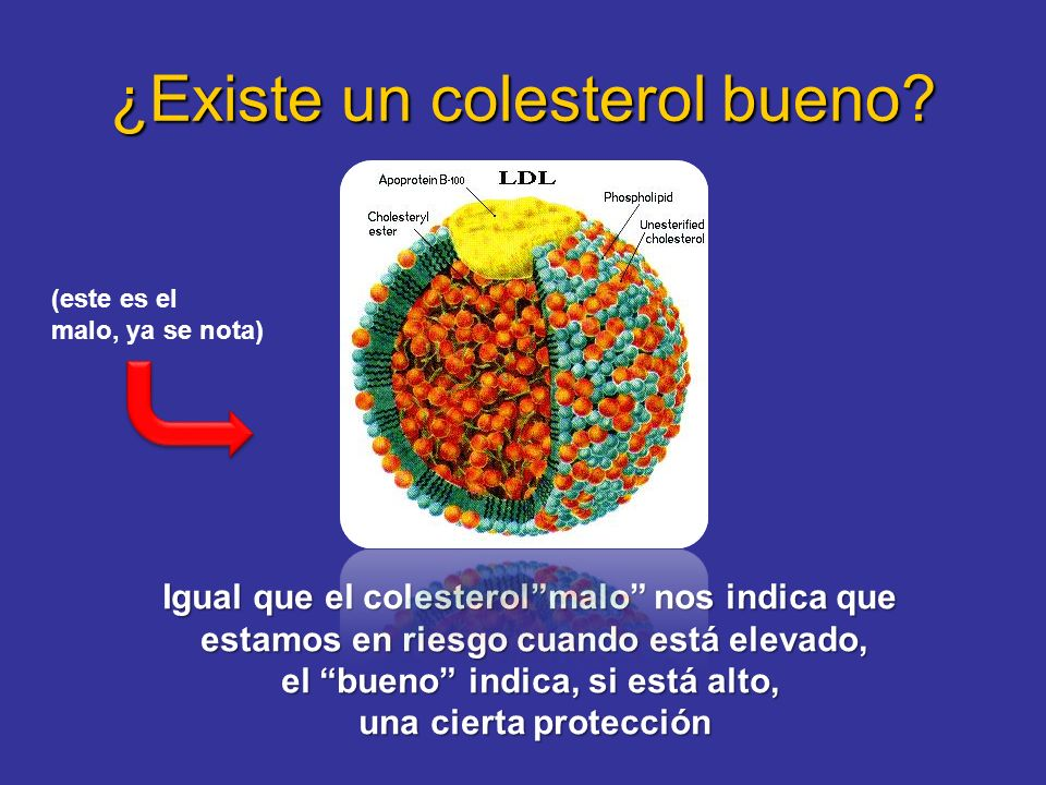 ¿Existe un colesterol bueno