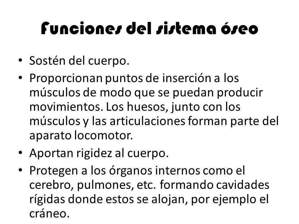 Funciones del sistema óseo