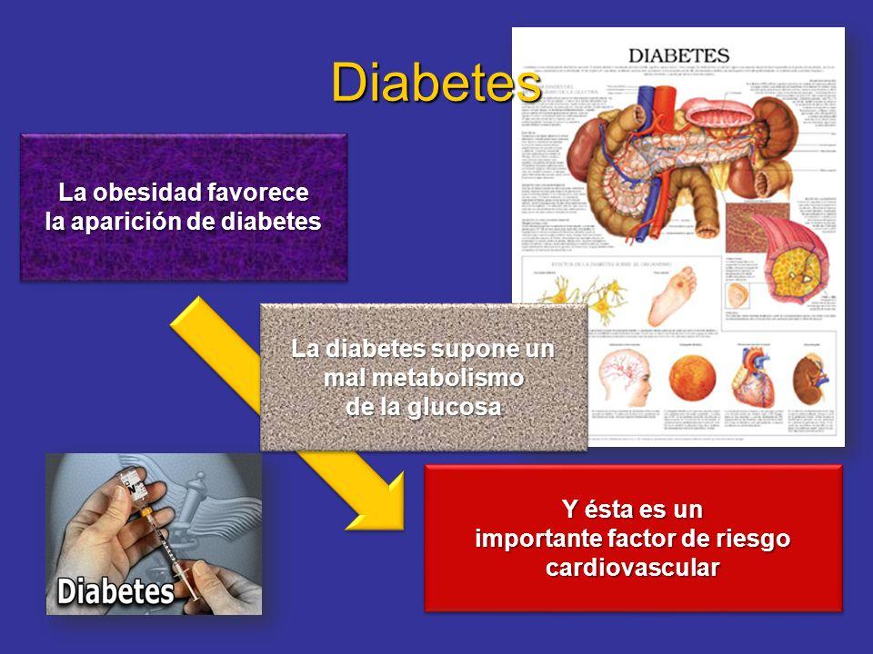 Diabetes La obesidad favorece la aparición de diabetes