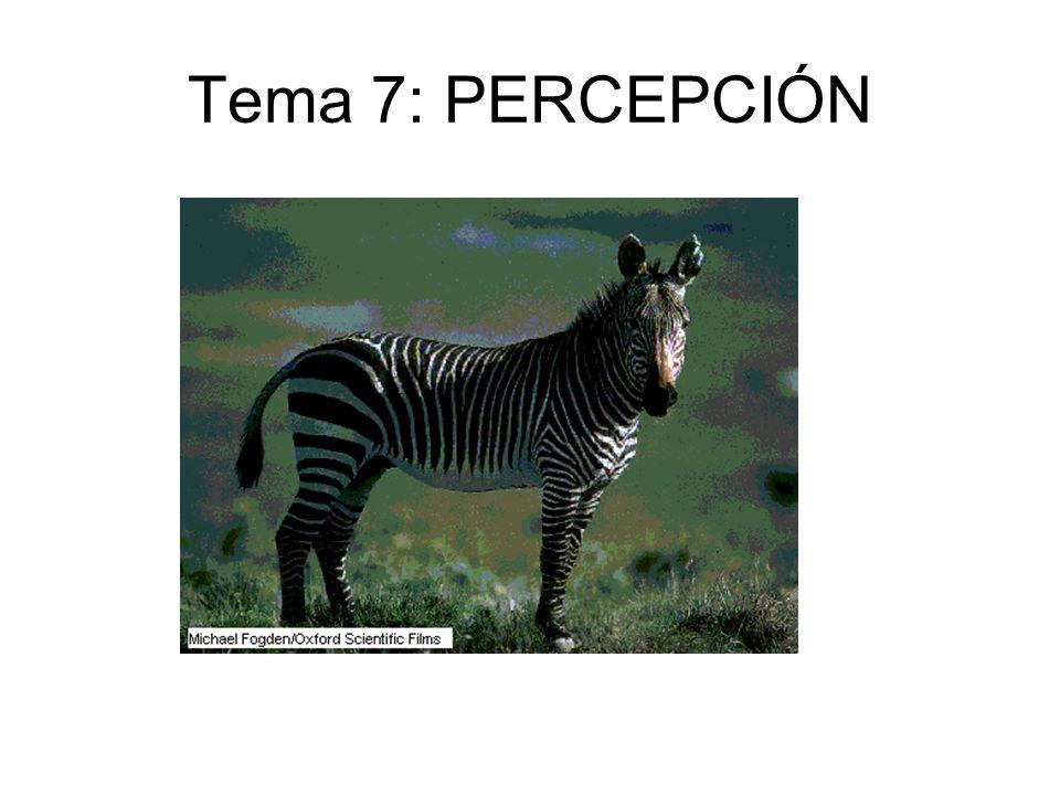 Tema 7: PERCEPCIÓN