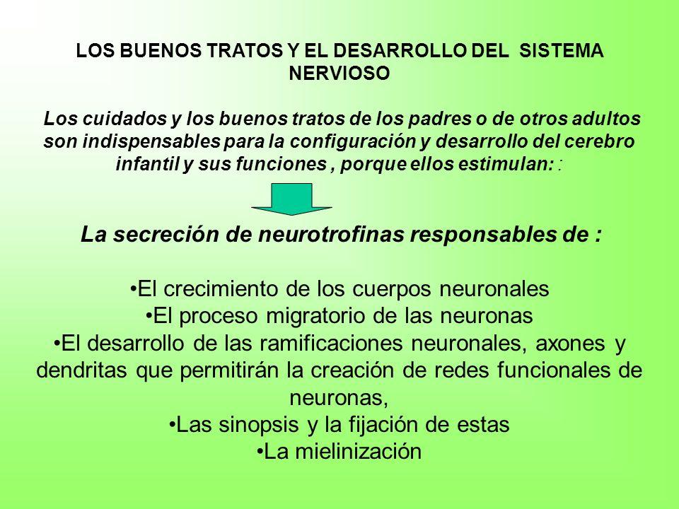 LOS BUENOS TRATOS Y EL DESARROLLO DEL SISTEMA NERVIOSO