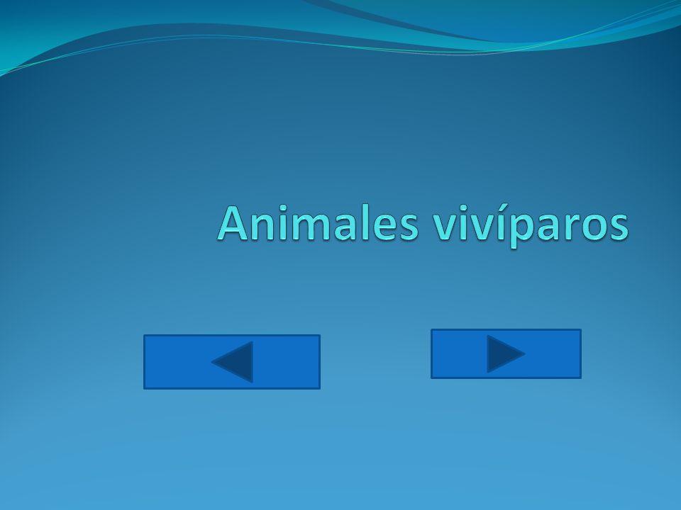 Animales vivíparos