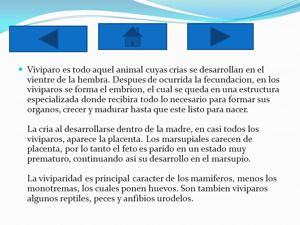 Viviparo es todo aquel animal cuyas crias se desarrollan en el vientre de la hembra.